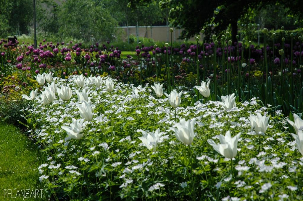 Frühjahrspflanzung