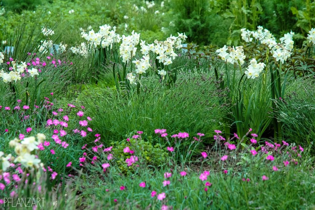 Heidepflanzung