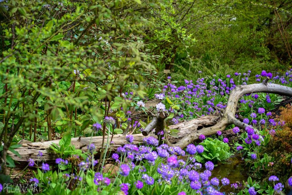 Japanischer Garten im Botanischen Garten Berlin-Dahlem