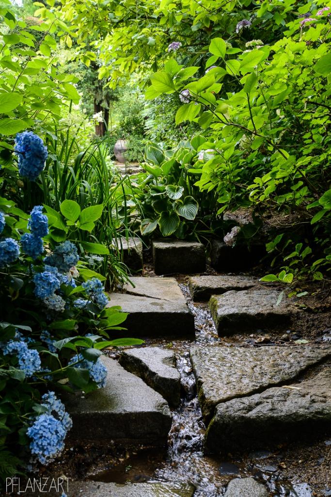 Jardin d'Agapanthe - Normandie