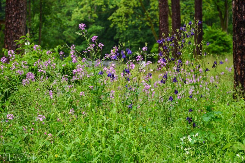 Ansaat von Wildstauden für halbschattige Standorte im Wald
